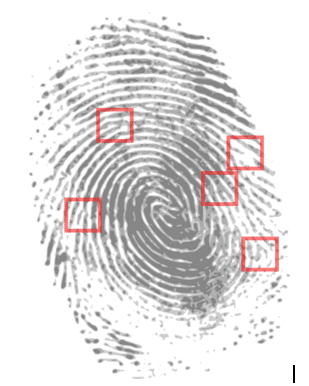 forensic it